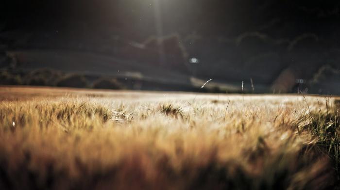 field, landscape, anime, nature, sunlight, wheat