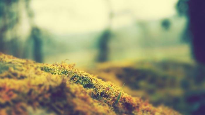 grass, tilt shift, nature, alone, macro