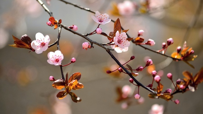 branch, flowers, nature, pink flowers, twigs