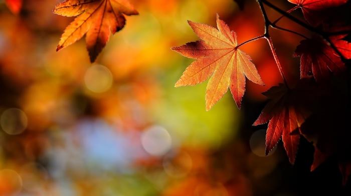 beautiful, foliage, autumn, branch, macro, motion blur