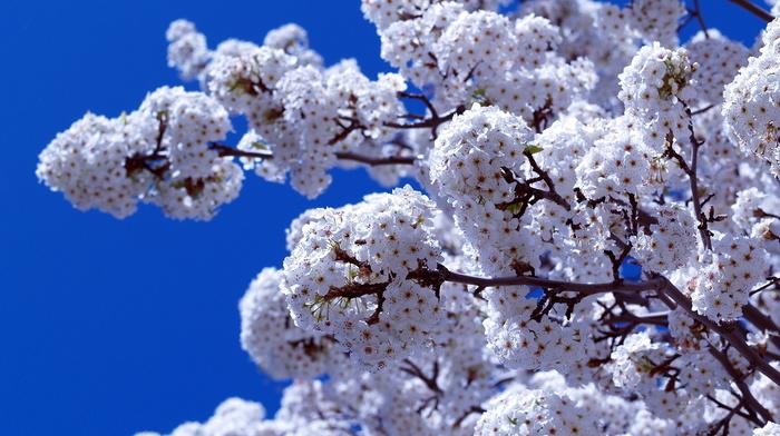 spring, bloom, flowers, branch, sky