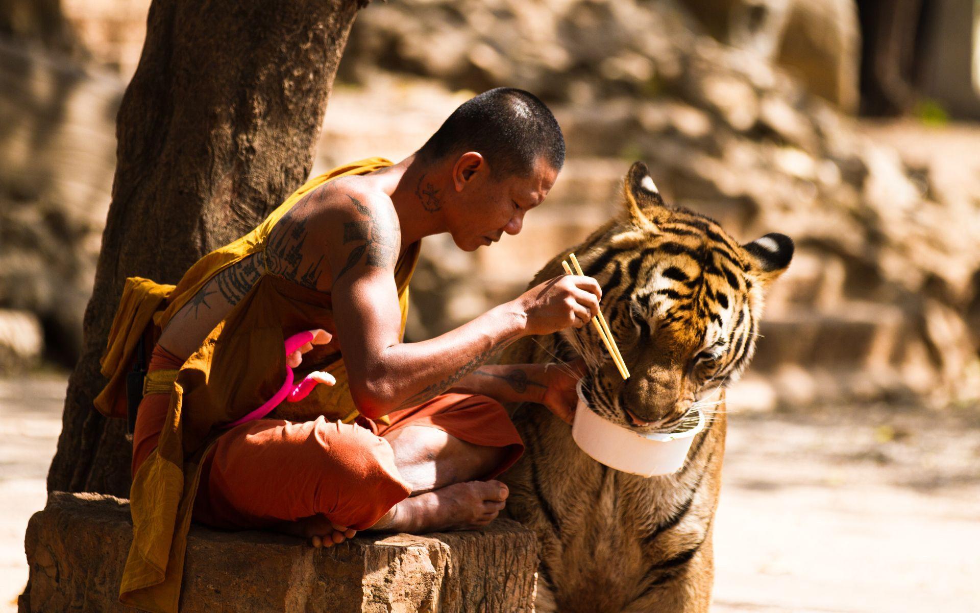 Tiger Buddhism Monks Anime