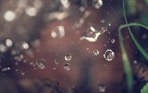 water drops, spiderwebs, macro