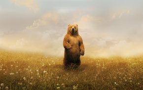 Grizzly Bears, Adobe Photoshop, grass, landscape, bears, animals