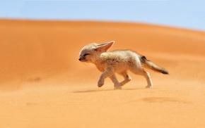 fennec, fox, sand, animals, desert