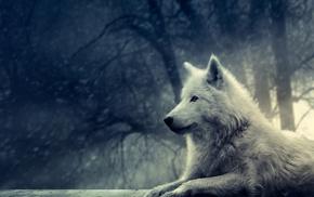 winter, animals, forest, snow, wolf