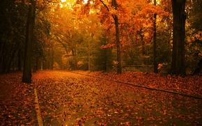 дорога, деревья, листья