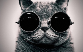 монохром, кошка, очки, животные, солнечные очки