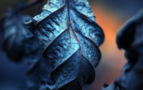 photography, leaves, depth of field, filter, macro, nature