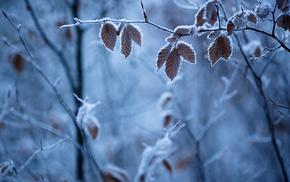 глубина резкости, лед, мороз, ветки, листья