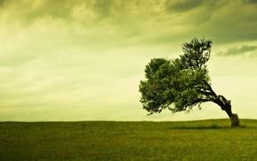 деревья, одиночество, поле, зеленый, природа