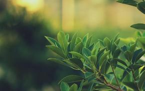 глубина резкости, листья, зеленый