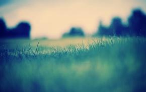 пейзаж, природа, трава, капли воды