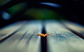 деревянная поверхность, глубина резкости, листья
