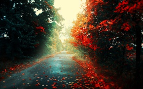road, forest, fall, landscape, red, leaves
