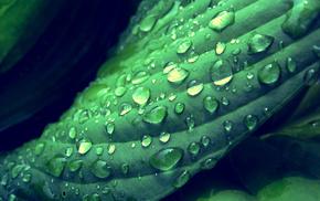 green, water drops, depth of field, leaves