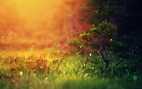 colorful, trees, landscape, blurred, simple background, nature
