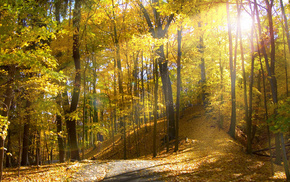 forest, leaves, sunlight, nature, trees, natural lighting