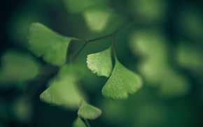 nature, leaves, green, plants, depth of field, ginko