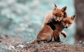 blurred, nature, fox, animals, anime, fox cubs