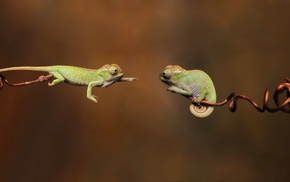 jumping, twigs, chameleons, reptile, wildlife, green