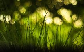bokeh, depth of field, green, grass, macro