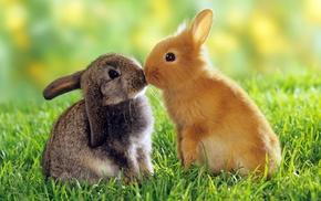 brown, rabbits, animals, grass