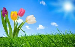 grass, sky, Sun, flowers