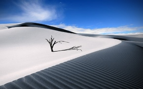 sky, shadow, sand, dune, nature, dead trees