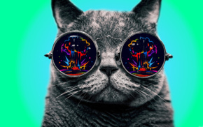 colorful, glasses