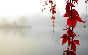 nature, fall, mist, water, leaves