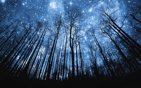 stars, trees, night