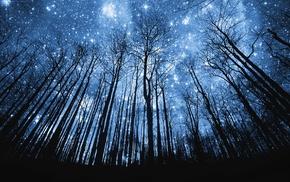 звезды, деревья, ночь