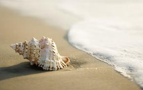 лето, ракушка, волна. прибой, песок