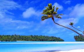 island, palm trees, sea, summer