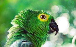 animals, birds, parrot