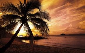palm, ocean, summer