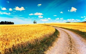 road, summer, field