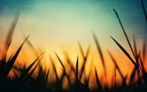 grass, nature, blue, macro, silhouette, green