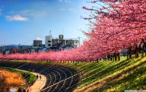 trees, landscape, cherry blossom, path, Japan, sky