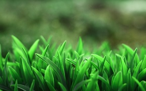 macro, grass