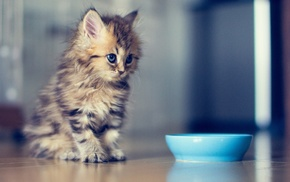 animals, bowls, Ben Torode, cat, kittens