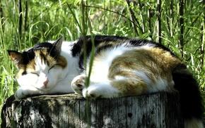 sleeping, animals