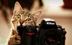 Nikon, camera, cat, animals, biting