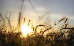 макро, природа, пейзаж, трава, солнечный свет
