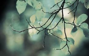 macro, leaves, twigs, nature, plants