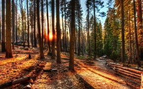 path, HDR, sunset, nature, trees