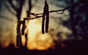 sunlight, quote, silhouette, twigs, nature, blurred