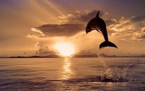 брызги, животные, дельфин, прыжок, закат