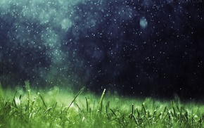 rain, artwork, nature, grass